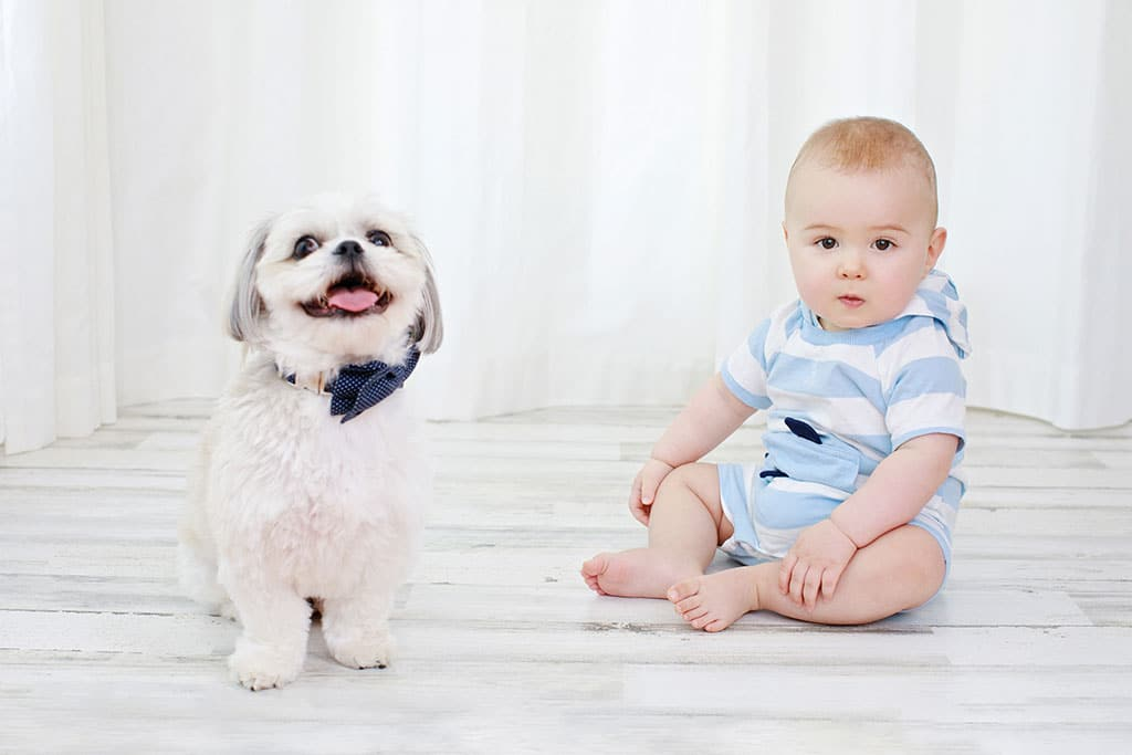 Adorable dog smiling next to a little boy in private studio session